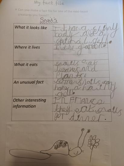 Final minibeast report on snails!