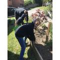 TC: Gardening