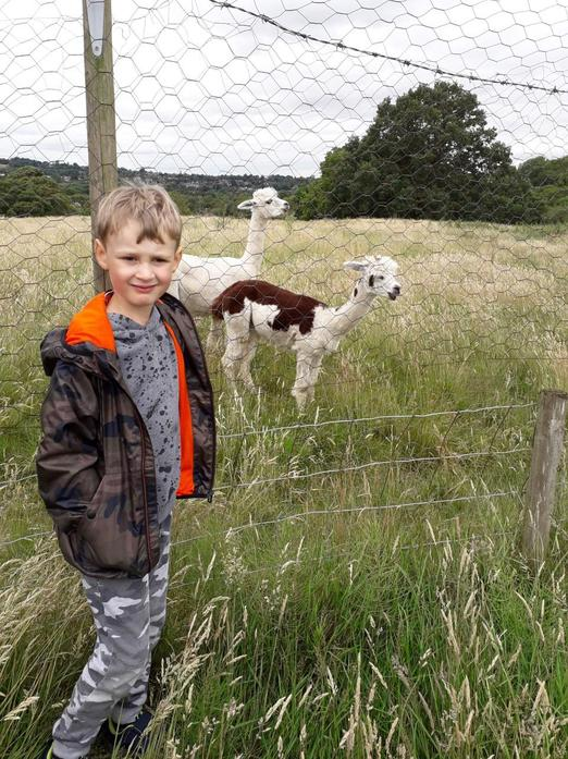 James sees alpacas on his sensory walk!