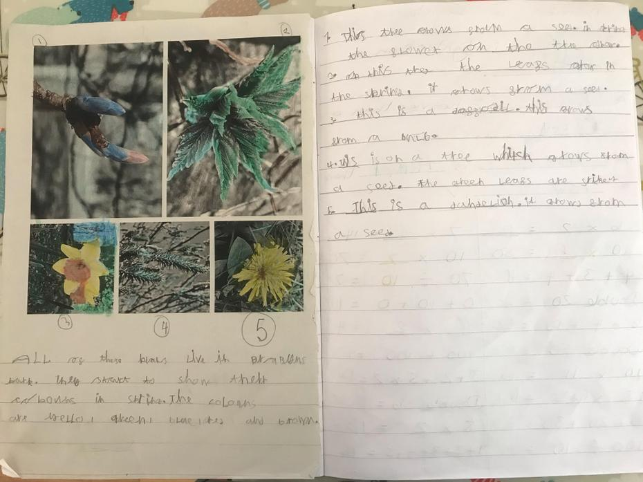 Fantastic identification of plants, Jacob!
