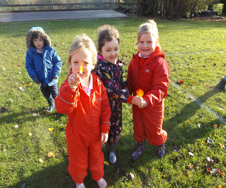 We sorted our leaves by shape, colour and size