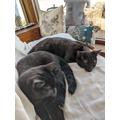Cat naps and cuddles