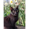 Cat photoshoots