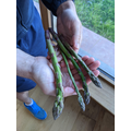 Harvesting (and eating)  home-grown veg