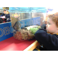Observing Harry our African Land snail