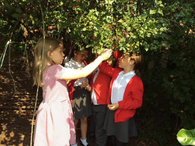 Here the children make use of our forest school area to explore seasonal changes.