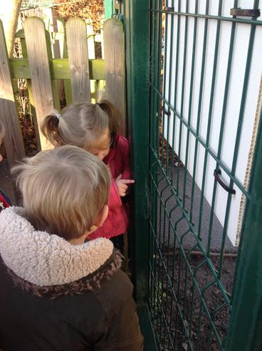 We discovered spiderwebs on the gate