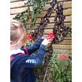 Creating our poppy display