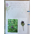 Flora has started her nature journal.