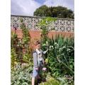 Luke has been growing plants.