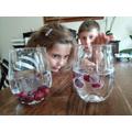 Tomas' dancing grapes experiment.