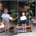 Ethan's giant sunflower plant!