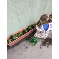 Planting our own fruit and vegetables.