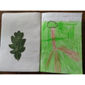 Tomas's nature journal,