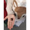 Hollie - a hornet