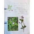 Flora has found different plants in her garden.