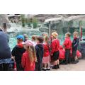 Watching the penguins splashing around