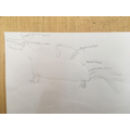 Hybrid mythical beasts using observational drawing