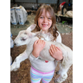 Hollie - a baby lamb