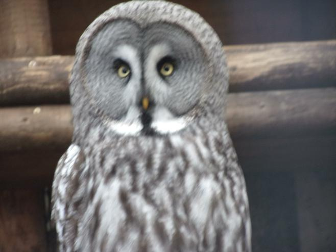 We enjoyed our visit to the Owl Sanctuary.