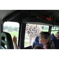 """""""It's a giraffe"""""""