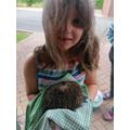 Hollie - hedgehog rescue
