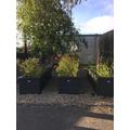 Nursery Flowerbeds
