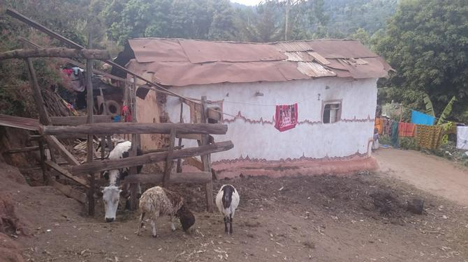 Animals tethered outside a house