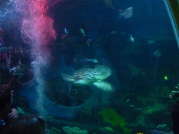 21 - Shark tunnel