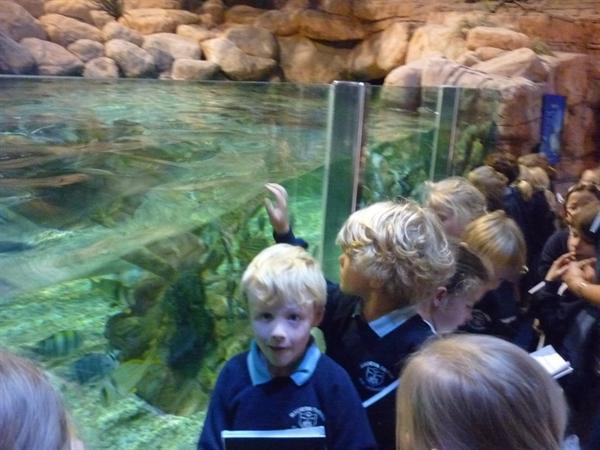 5 - Shark and wray tank