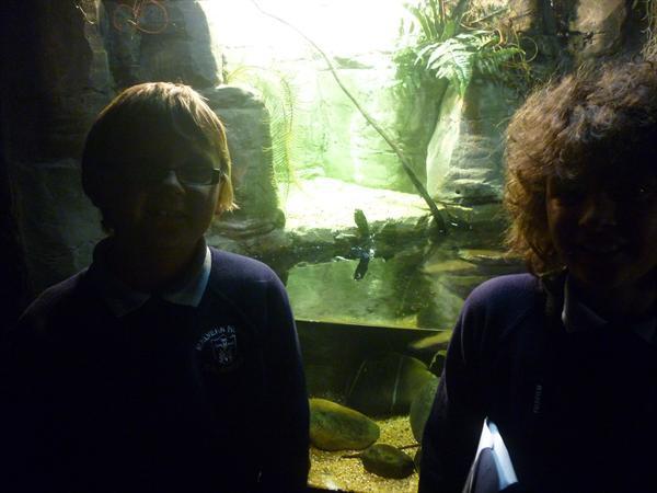The shark tunnel!