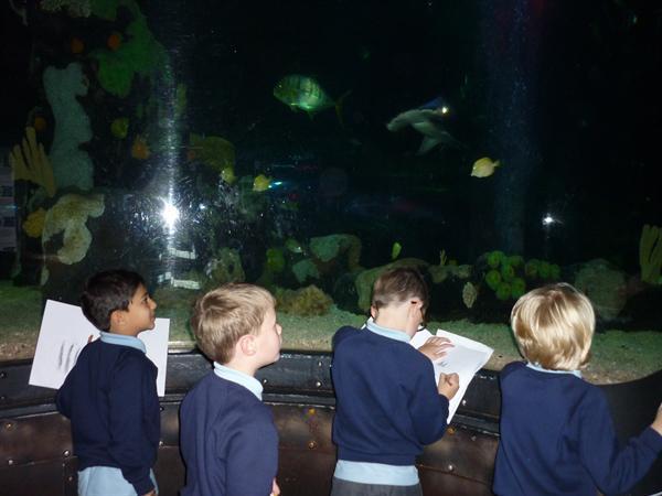 Year 2 Sea Life Centre Photos