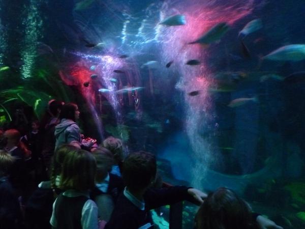 19 - Shark tunnel