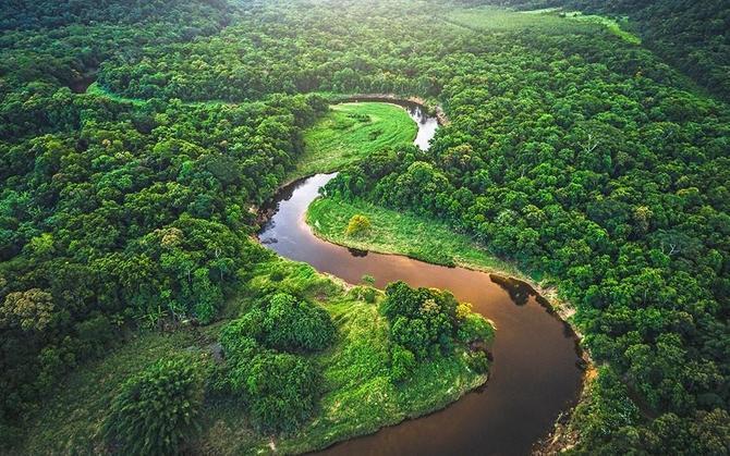 Rainforests!