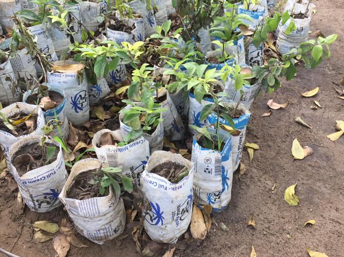 Recycling milk packets to grow plants!