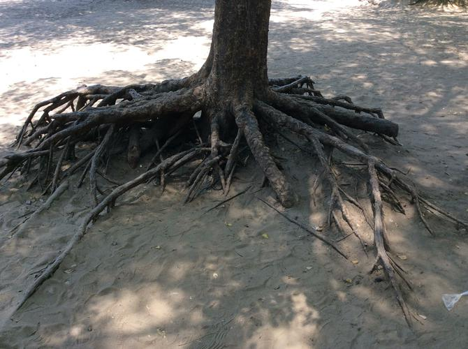 The floods exposed the tree roots.