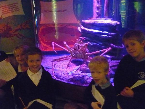 11 - Giant Spider Crab