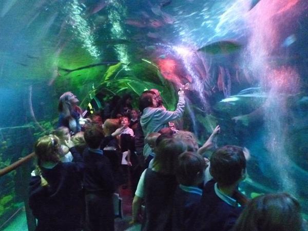 20 - Shark tunnel