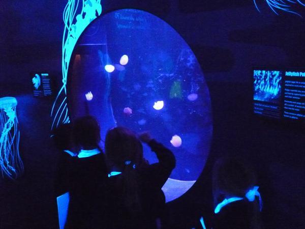 9 - Jellyfish