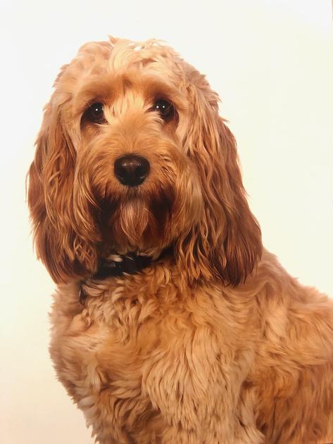 Molly - School dog
