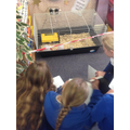 Visiting chicks and thinking of adjectives.
