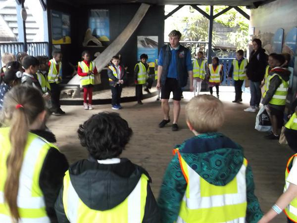 Class 8 Trip to the Sealife Centre. July 2016