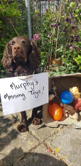 Y/12 Murphy's Missing Toys
