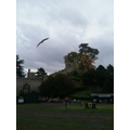 We watched a falconry display.