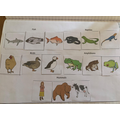 Alfie's Animal Groups