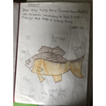 Well drawn and labelled fish