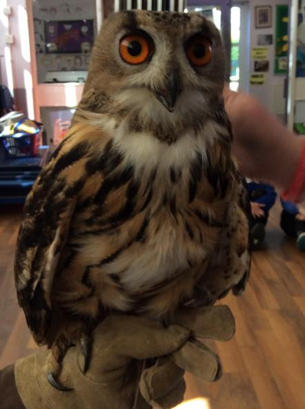 Y5/6 meet the Owls