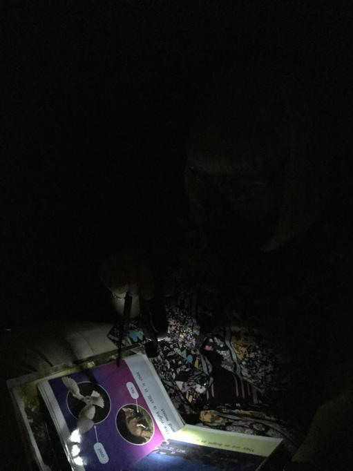 Look at information books about owls and other nocturnal animals under torch light.