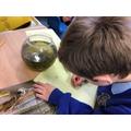 Investigating tadpoles.