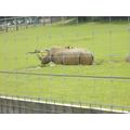 The Rhinos.